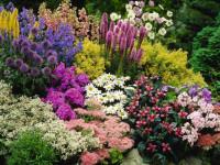 Многолетние цветы для дачи — Простой способ для долговечного декора! + 84 фото