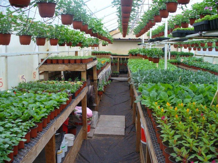 Форум людей выращивающих рассаду цветов для продажи