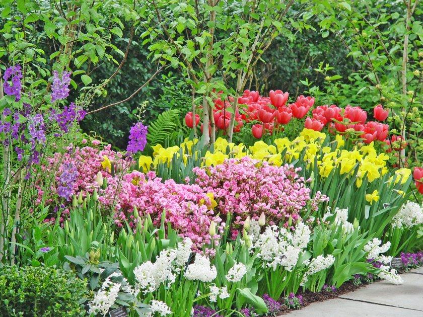 красивые фото с лилиями и другими цветами