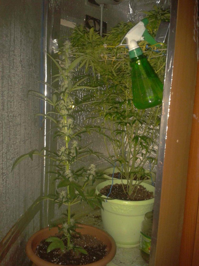 Как вырастить гидропон в домашних условиях