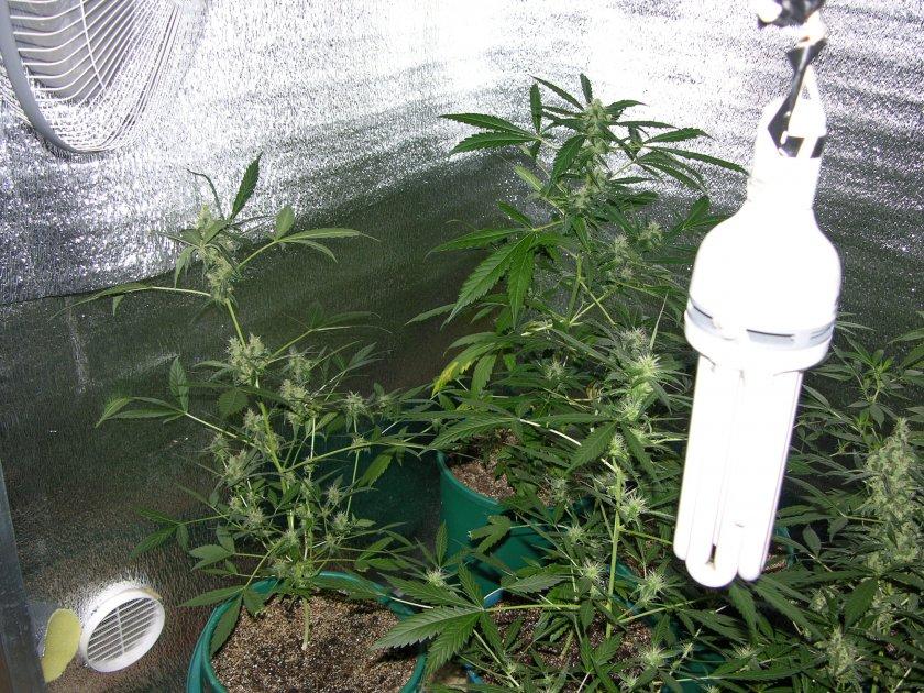Какая лампа нужна для выращивания 117