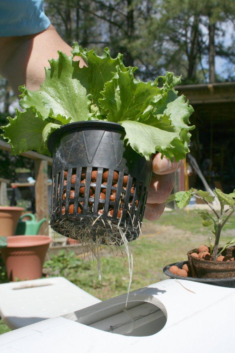 Для гидропонного выращивания растений 309