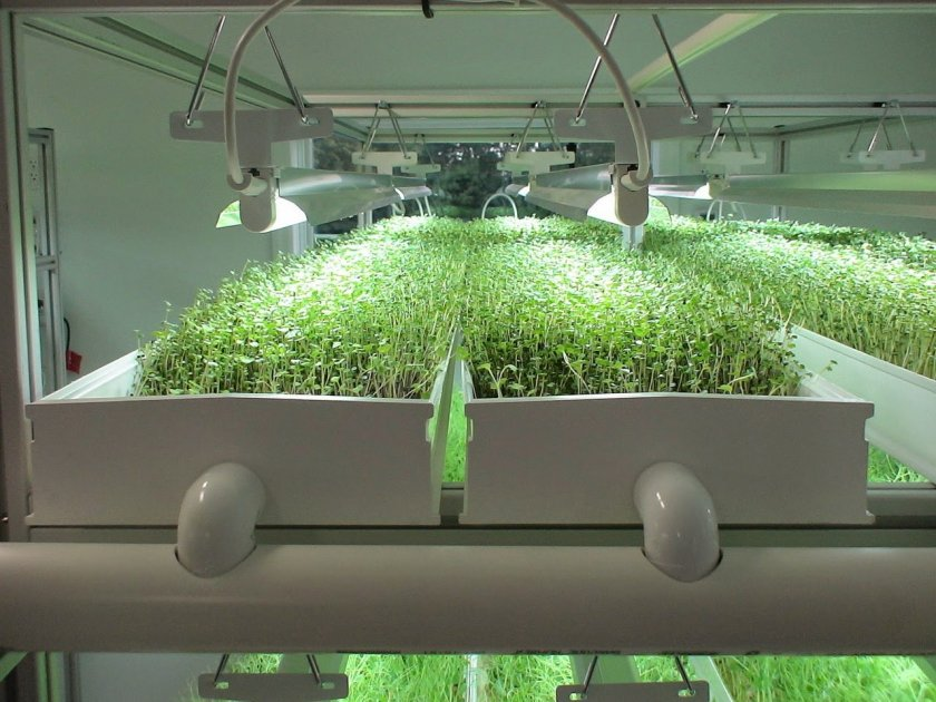 the two main categories of hydroponic growing There are two main growing categories: soil and soilless soilless is often referred to hydroponic growing , and growing in soil is not a synonym to organic growing  organic growing does not use petrochemical-derived nutrients and is harder to master.
