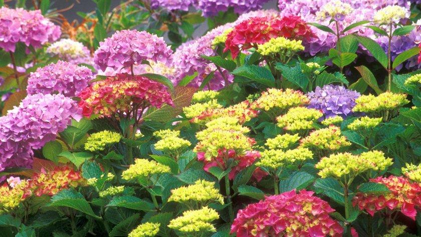 Фото цветов многолетних цветущих все лето и