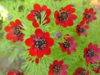 Адонис — Ненавязчивый и красивый цветочный декор! +89 фото