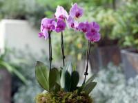 Как ухаживать за орхидеями — Правильные способы качественного ухода! (85 фото)