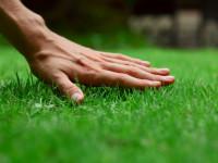 Опрятный газон своими руками — Лучший стиль для красивого ландшафта! (94 фото)