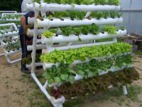 Самодельная гидропоника — лучший способ для быстрого выращивания на воде! (148 фото)