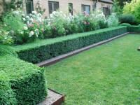 Живая изгородь — Современные технологии для оживленной красоты! (87 фото)