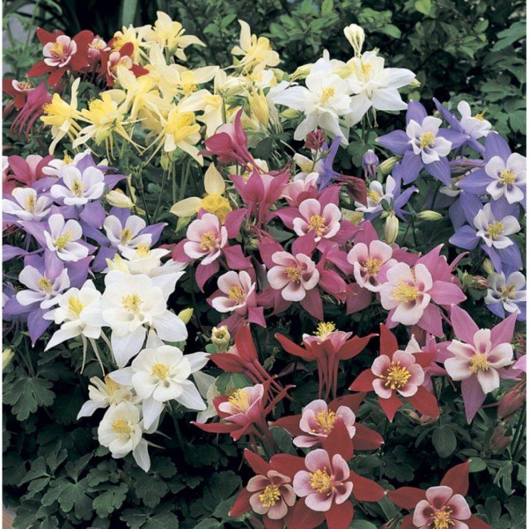 Виды букетных цветов фото с названиями словам стаммерса