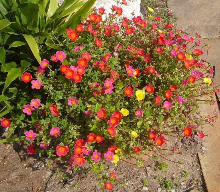 полуденный жар цветы фото наличии дороге двух