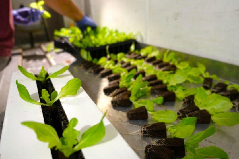 Как выращивать гидропон в домашних условиях