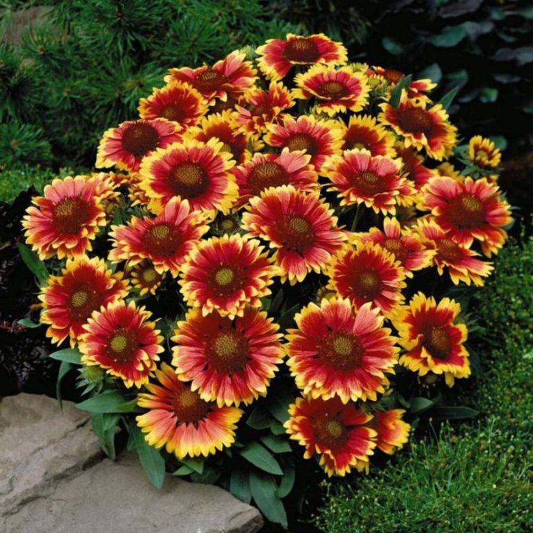 садовые цветы фотографии профессионалов бровям